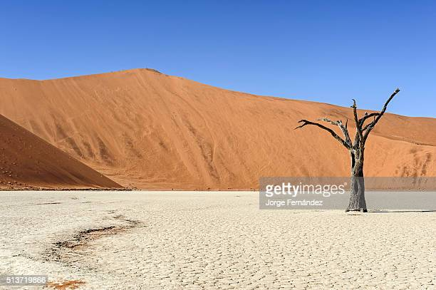 Silhouette of a dead tree standing on clay ground with a big red dune in the background