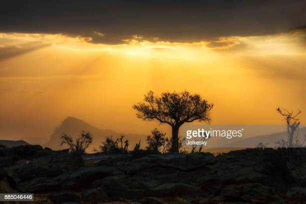 Silhouette of a desert tree at sunset at Jebal Shams, Oman