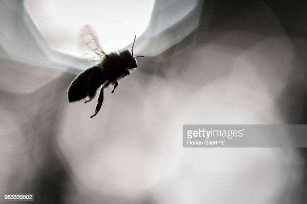 Silhouette of a flying bee on May 18 2018 in Boxberg Germany
