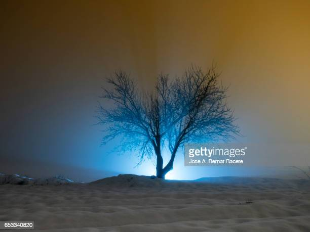 Silhouette of a fruit-bearing tree in winter in an agricultural covered with snow field in the night
