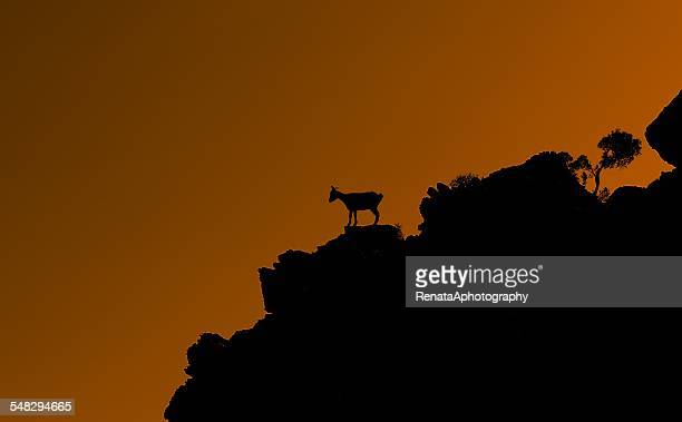 silhouette of a goat standing on a hill at sunset, tilos, kos, greece - dodecanese islands stock photos and pictures
