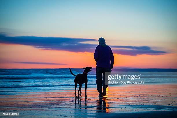 a silhouette of a man and his dog on a beach - gower peninsula stock photos and pictures