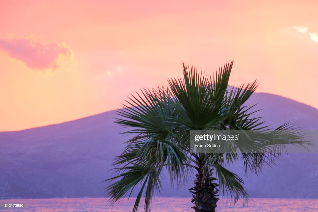 Silhouette of a palm tree at sunset, with dramatic sky : Stockfoto