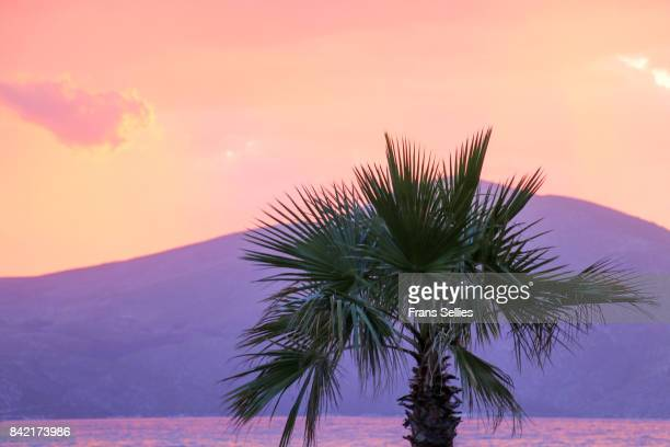 silhouette of a palm tree at sunset, with dramatic sky - frans sellies stockfoto's en -beelden