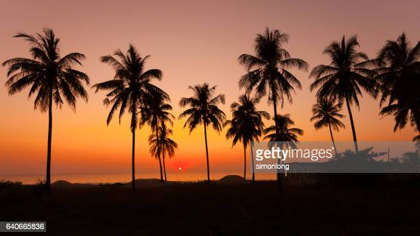 Silhouette of a palm tree on the beach, Bali ,Indonesia