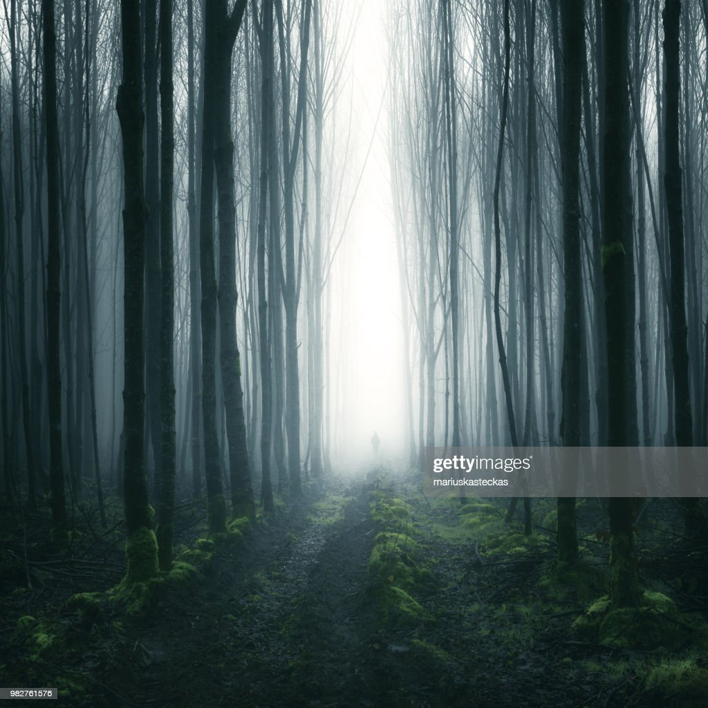 Silhouette of a person standing in a forest, Cootehill, County Cavan, Ireland : Stock Photo