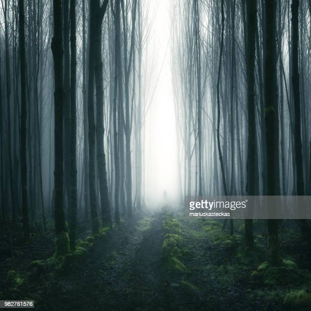 silhouette of a person standing in a forest, cootehill, county cavan, ireland - spooky stock pictures, royalty-free photos & images