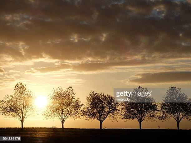 silhouette of a row of trees at sunset, Chauray, Poitou-Charentes, France
