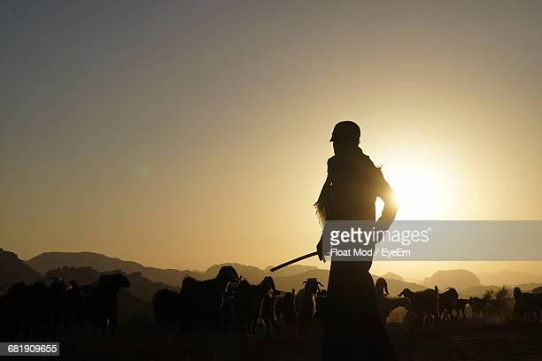 silhouette of a shepherd at sunset - jordanian workforce stock pictures, royalty-free photos & images