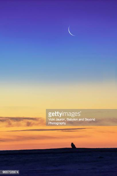 Silhouette of a Snowy Owl Against the Moon at Jones Beach