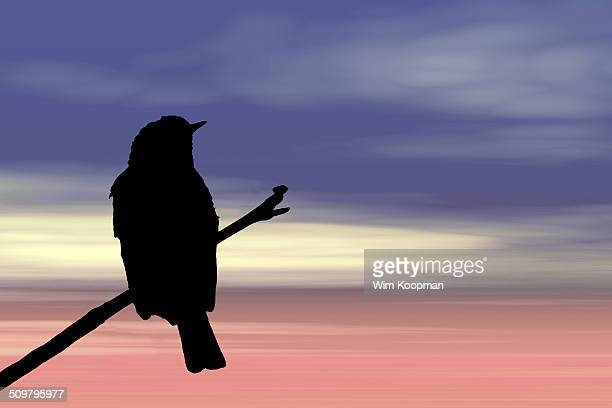 Silhouette of a spotted flycatcher