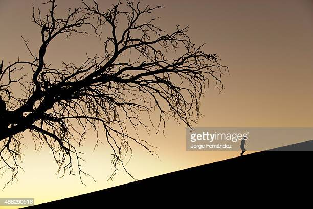 Silhouette of a tree and a person climbing Dune 45 at sunrise