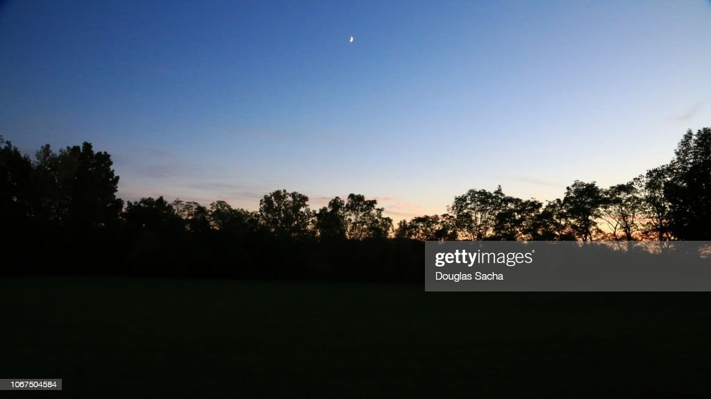 Silhouette of a tree line on a colorful sky : Stock Photo