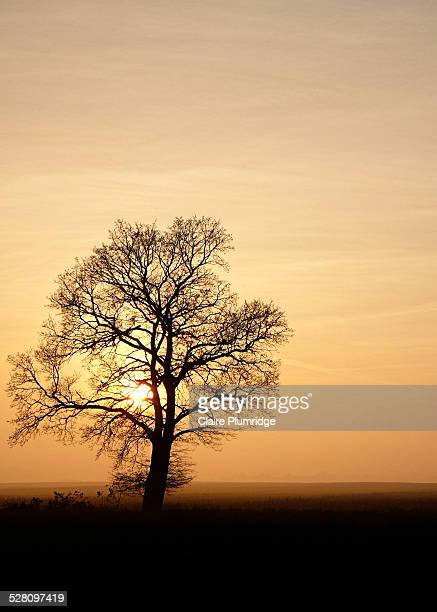 silhouette of a tree - claire plumridge stock pictures, royalty-free photos & images