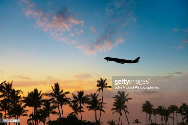 Silhouette of airplane flying over palm trees in sunset