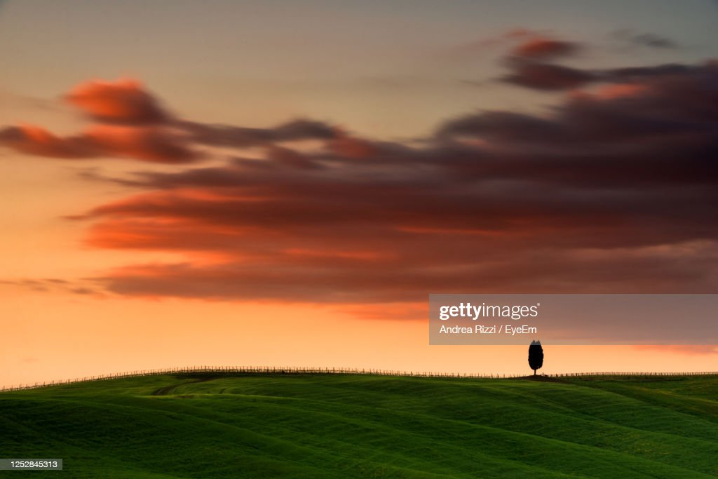 Silhouette Of An Isolated Tree  On The Field Against Sky During Sunset In Val D' Orcia : Foto stock