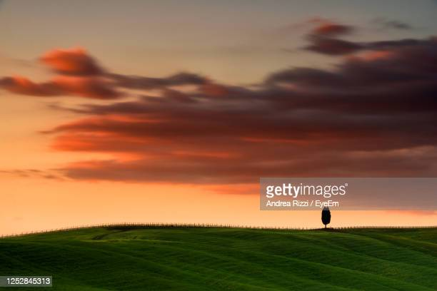 silhouette of an isolated tree  on the field against sky during sunset in val d' orcia - andrea rizzi stockfoto's en -beelden