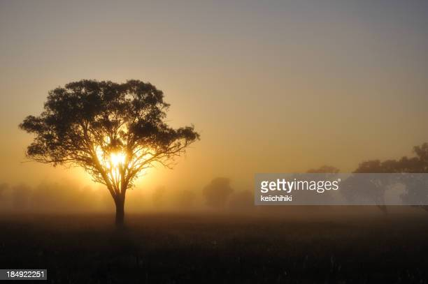 Silhouette of Australia Landscape Tree at Sunset