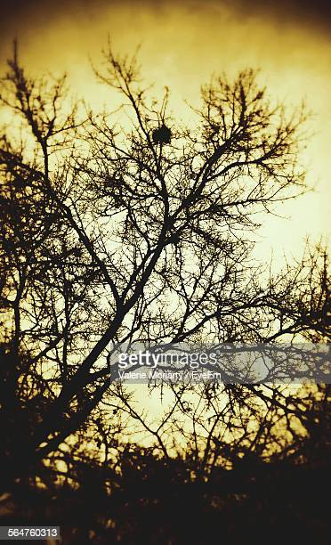 Silhouette Of Bare Tree During Dusk