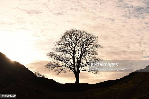 Silhouette Of Bare Tree On Landscape Against Sky