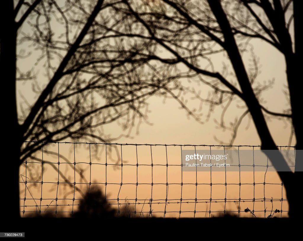 Silhouette Of Bare Trees Against Sky During Sunset : Stock Photo
