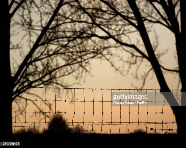 silhouette of bare trees against sky during sunset - paulien tabak stock pictures, royalty-free photos & images