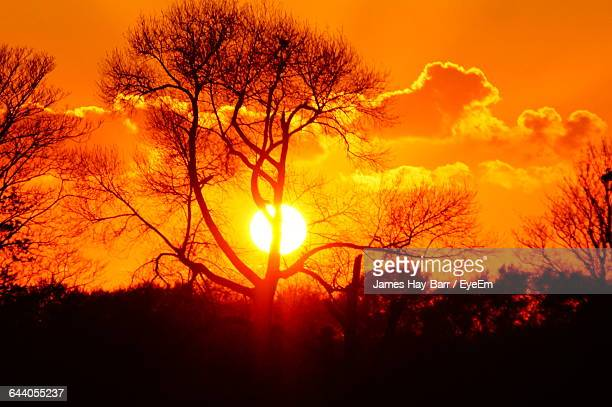silhouette of bare trees against sunset sky - barr stock pictures, royalty-free photos & images
