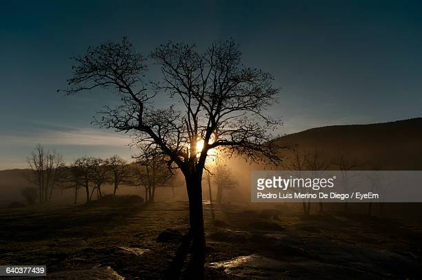 Silhouette Of Bare Trees On Landscape