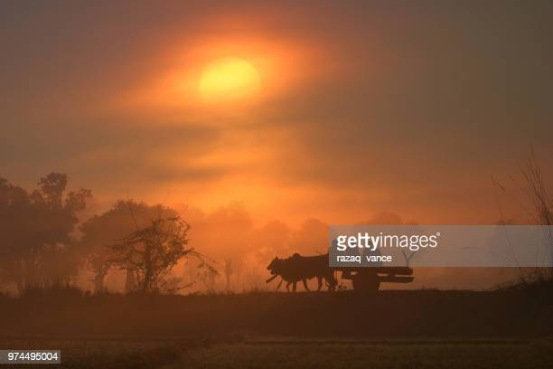 silhouette of barouche with three people against sunrise, punjab, pakistan - punjab pakistan stock photos and pictures