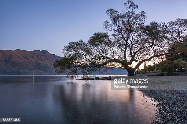 Silhouette of Big Tree at Lake Wakatipu, Queenstown, South Island, New Zealand