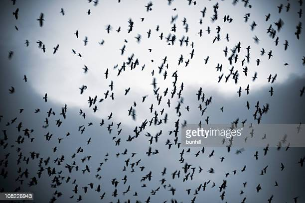 Silhouette of Bird Flock Covering Sky
