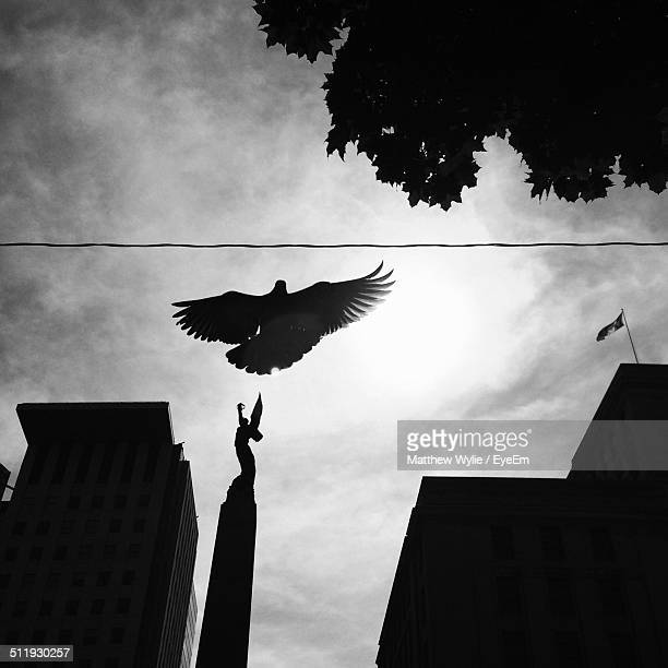 Silhouette of bird flying over city