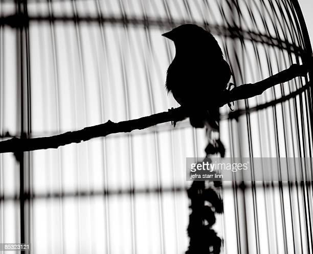 silhouette of bird in cage - 一匹 ストックフォトと画像