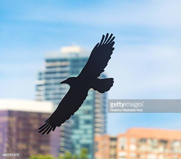 Silhouette of bird in flight against city skyscrapers and blue sky The device is used to avoid birds crashing in to glass windows