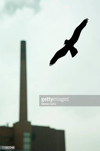 Silhouette of bird on window with smokestack in background