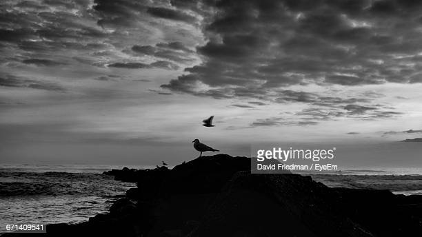 Silhouette Of Bird Perching On Coast