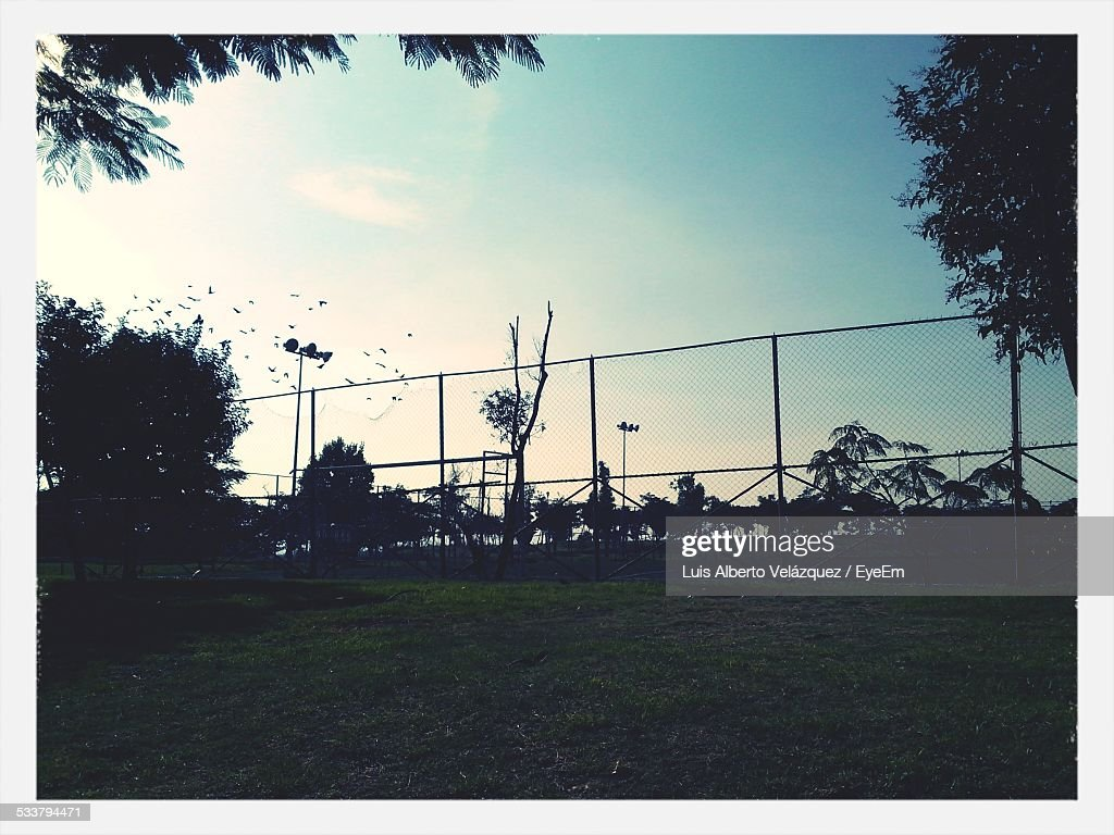 Silhouette Of Birds Flying Over Basketball Court : Foto stock