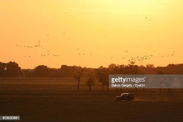Silhouette Of Birds Flying Over Field At Sunset