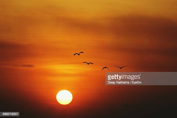 Silhouette Of Birds Flying