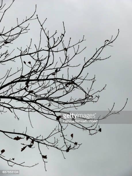 Silhouette of birds perching on tree