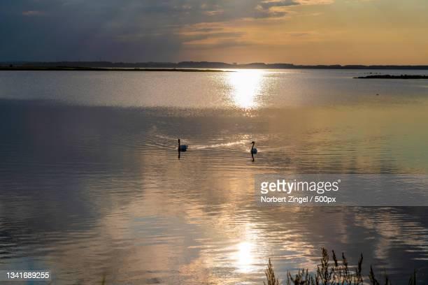 silhouette of birds swimming in lake against sky during sunset,amt geltinger bucht,germany - norbert zingel stock-fotos und bilder