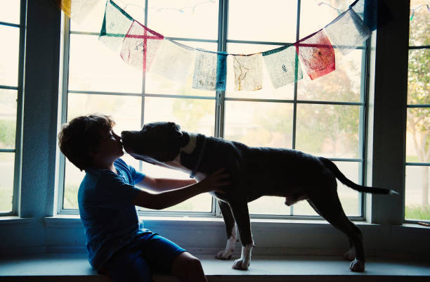 Silhouette of boy and dog in window