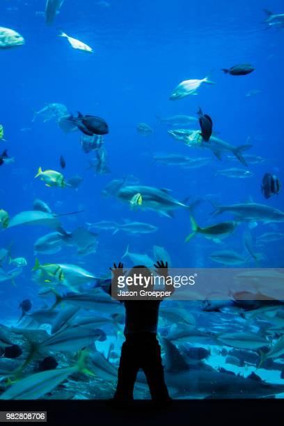 silhouette of boy (6-7) looking at aquarium with fish - aquarium stock pictures, royalty-free photos & images