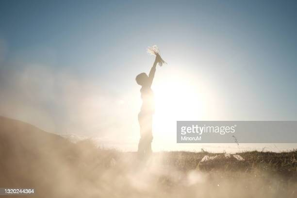silhouette of boy standing in the field full of sunlight, holding grasses - flame stock pictures, royalty-free photos & images