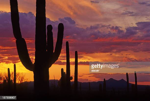 Silhouette of cactus against orange red and purple sunset
