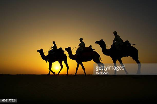silhouette of camel caravan at sam sand dune, jaisalmer, rajasthan, india - camel train stock pictures, royalty-free photos & images