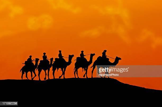 silhouette von kamel karawane durch die wüste bei sonnenuntergang (x) - camel active stock-fotos und bilder