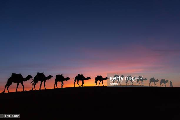 silhouette of caravan in desert sahara, morocco with beautiful and colorful sunset in background - camel train stock pictures, royalty-free photos & images