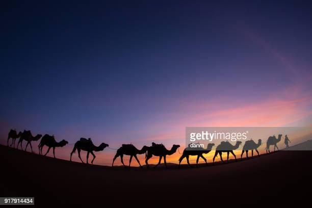 silhouette of caravan in desert sahara, morocco with beautiful and colorful sunset in background - saudi arabien stock-fotos und bilder