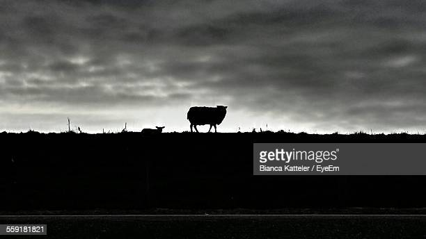 Silhouette Of Cattle At Sunset